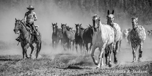 Approaching Horses