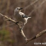 Web Clarks Nutcracker Mar26