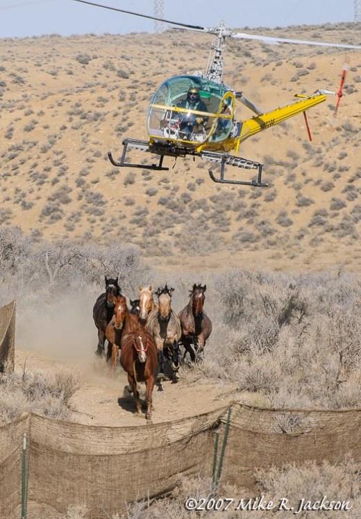 Web Judas Horse2007