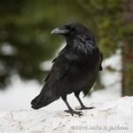 Web Raven April26