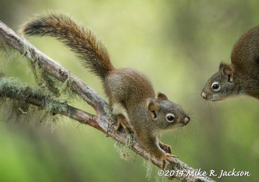 Web_YoungSquirrels_June1