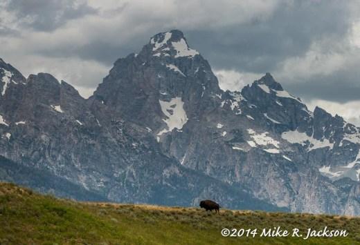 Grand Bison