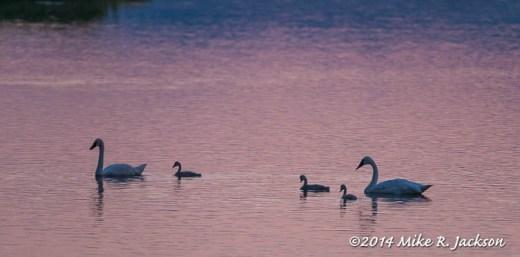 Sunrise On Flat Creek