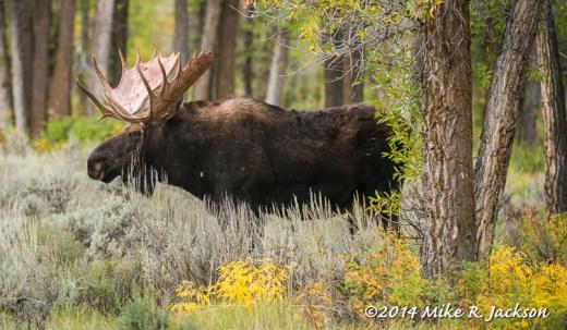 Custer in Foliage