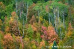 Mountain Maple Sept 7