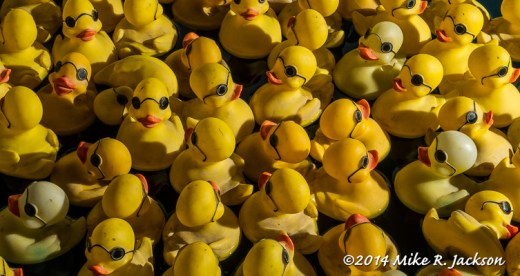 Rubber Duckies 2