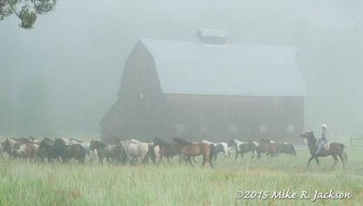 Foggy Morning Roundup