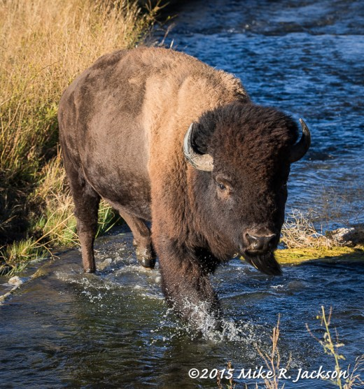 Bison Bull Crossing Outlet