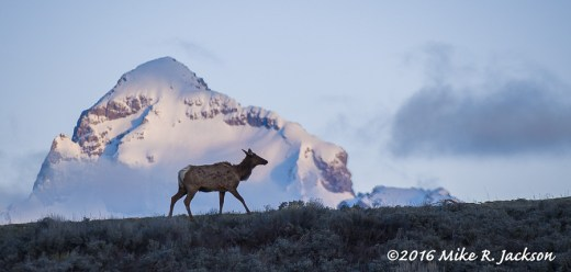 Elk and Buck Mountain