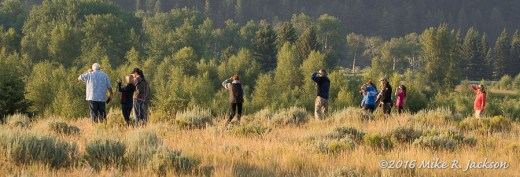 Moose Watchers
