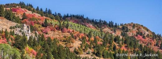 Mountain Maple Hillside
