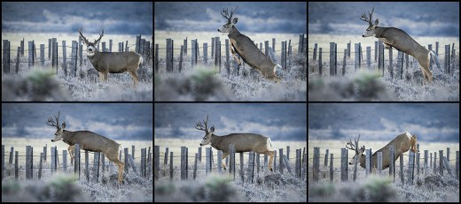 Buck Jumping Fence