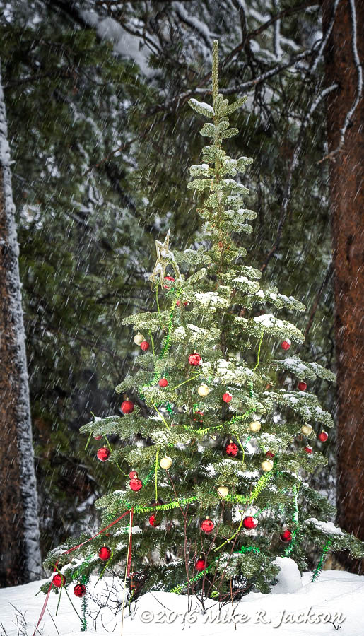GTNP Christmas Tree