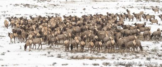 Elk Refuge