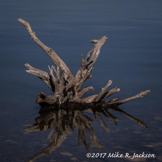 Jackson Lake Root