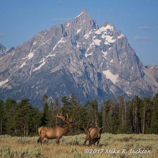 Elk and Grand