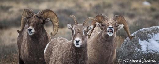 Bighorn Group