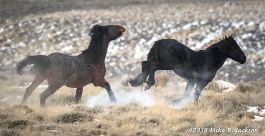 Wild Horse Action