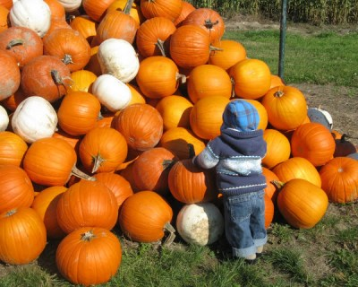The Pumpkin Patch and Carving Ideas