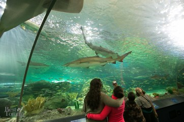 Ripleys-Aquarium-BestofToronto-2013-008