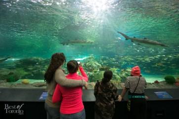 Ripleys-Aquarium-BestofToronto-2013-009