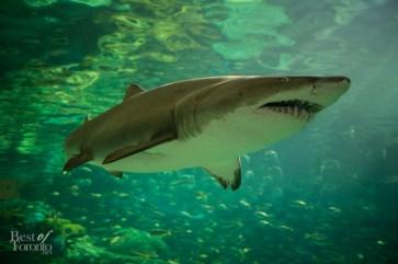 Ripleys-Aquarium-BestofToronto-2013-015