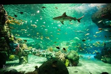 Ripleys-Aquarium-BestofToronto-2013-020
