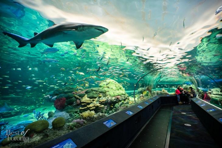 Ripleys-Aquarium-BestofToronto-2013-022