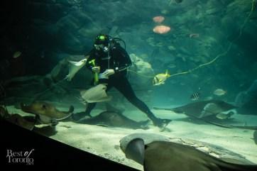 Ripleys-Aquarium-BestofToronto-2013-051