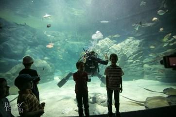 Ripleys-Aquarium-BestofToronto-2013-053