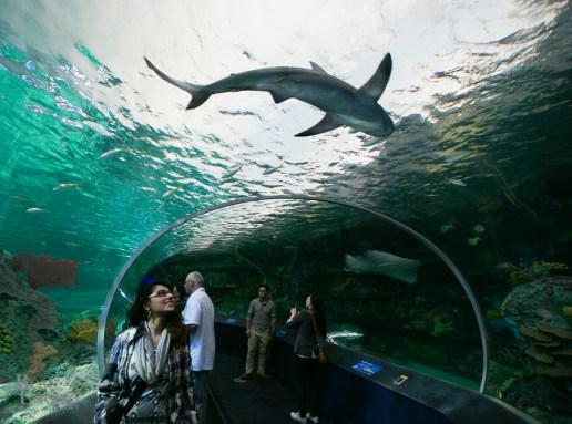 Ripleys-Aquarium-BestofToronto-2013-061