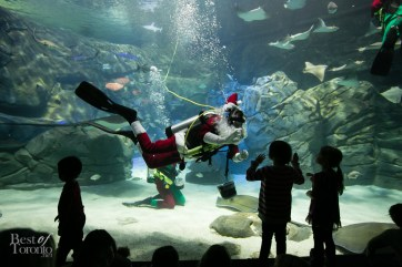 Ripleys-Aquarium-Scuba-Claus-BestofToronto-2013-004