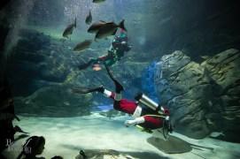 Ripleys-Aquarium-Scuba-Claus-BestofToronto-2013-009