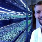 Microgreens and vertical farming