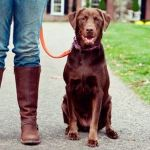 Udemy Dog Behavior & Training Problems
