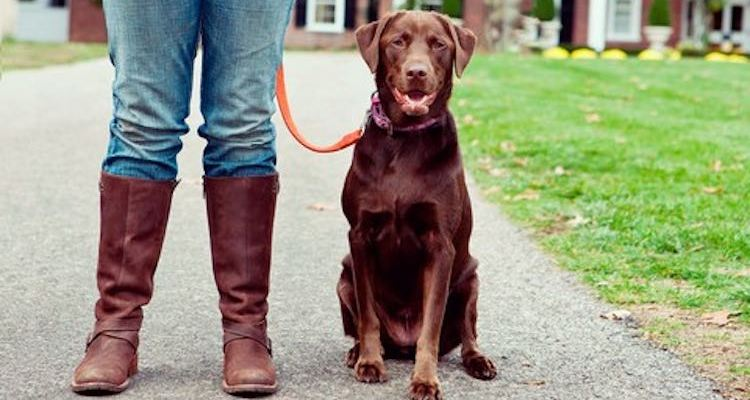 Simple Solutions for Common Dog Behavior and Training Problems