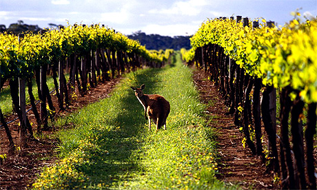 Vineyard Australia
