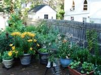 Best Way to Plan Your Patio Garden