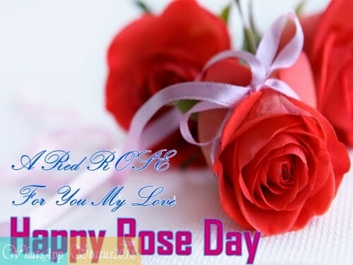 Happy Rose Day Images, Beautiful flowers, Rose Day Images 2021