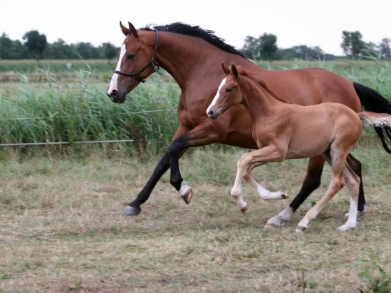 how to identify racehorses that are getting faster