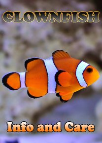 Ocellaris Clownfish Info and Care