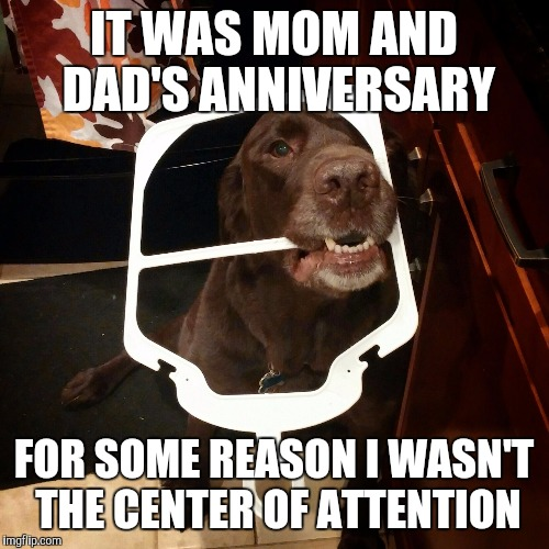 funny happy anniversary meme for parents