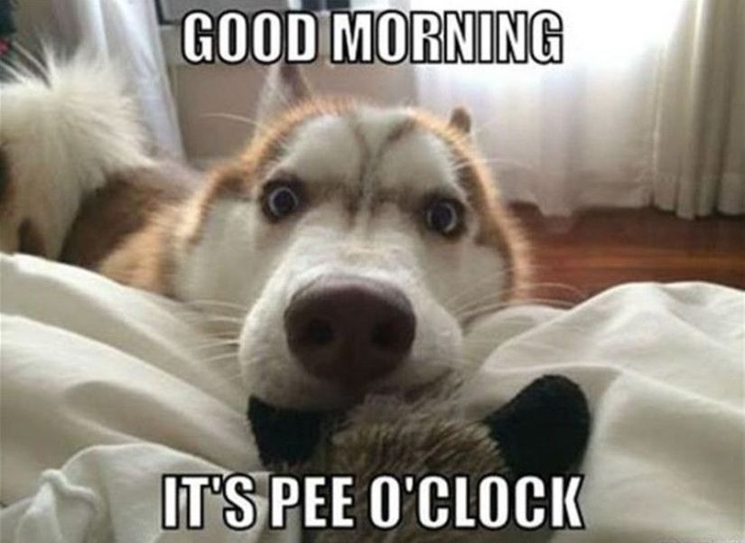 Good morning dog meme
