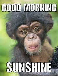 good morning sunshine meme