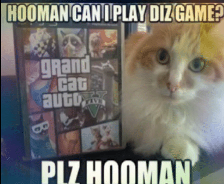 clean game cat memes