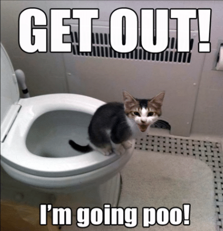 cute cat doing poo memes
