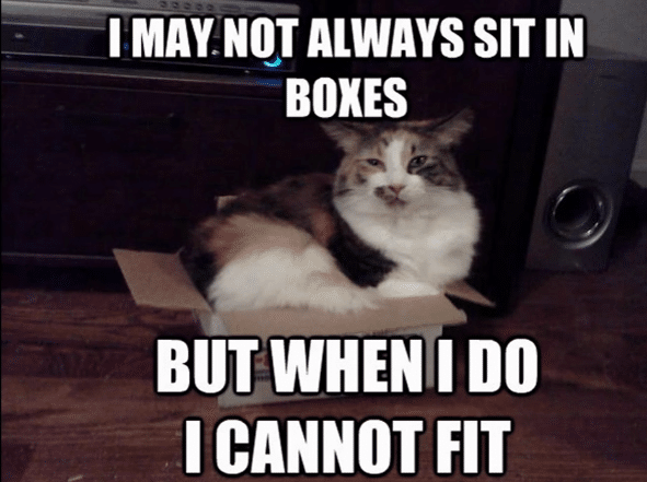 fat cat try to fit in box memes