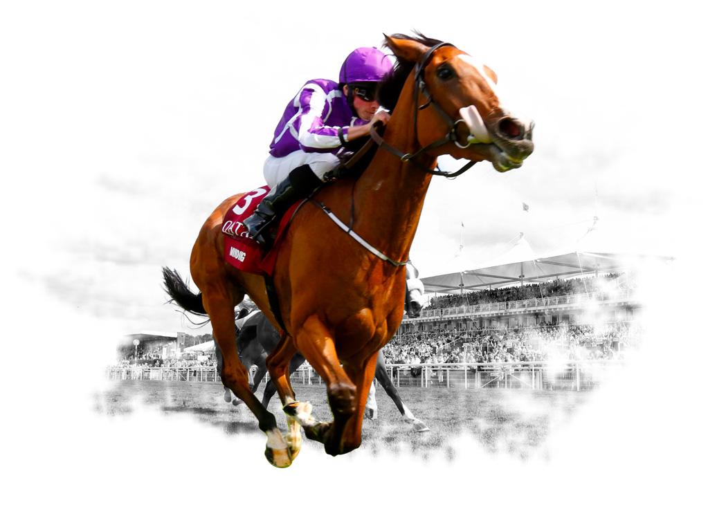BetDSI Racebook | Online Horse Race Betting & Odds