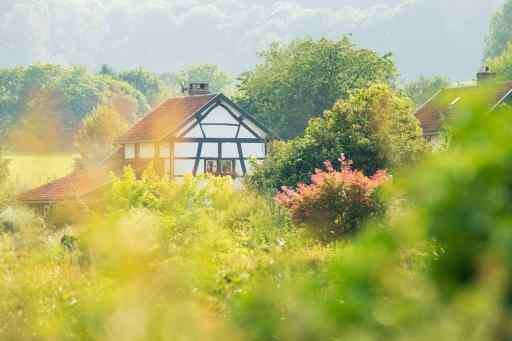 Prachtige foto gemaakt in de zomer met bomen in de bloei en een mooie karakteristieke woning
