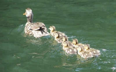 Ducks aren't in a Row? Just Start Swimming
